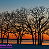 Oaks silhouetted by crimson sunrise over Lake Mendota on Bishops Bay (USA WI Middleton)