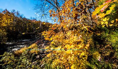 Creative Imagery by Robert Obst Nikon D810 Landscapes Inspirational Wolf River Refuge FAVS Image 3242