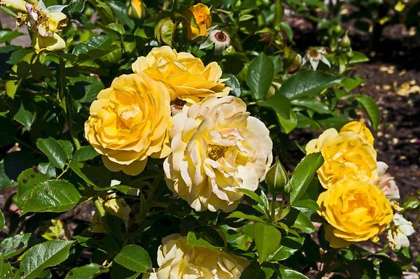 Flowers - Single Varieties
