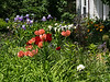 Summer Garden (IN9065)