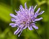 D193-2014  Unidentified wildflower.<br /> <br /> Furstenberg Park, Ann Arbor<br /> July 12, 2014