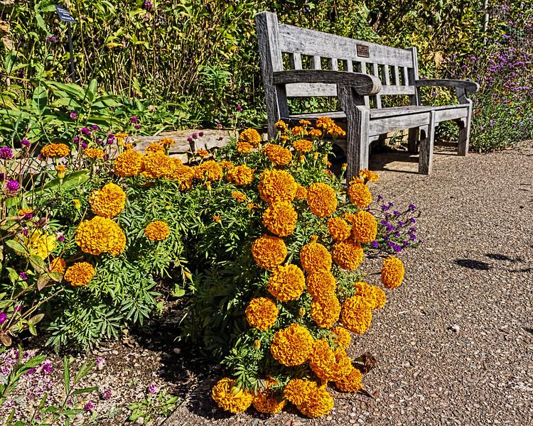 D283-2015  <br /> <br /> Gateway Garden at Matthaei Botanical Gardens, Ann Arbor, Michigan<br /> Taken October 10, 2015
