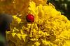 No.  It's not a ladybug.