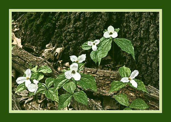 Nature - Flora