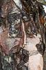 Birch bark abstract
