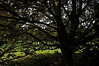 This European beech tree has bewitched me.<br /> <br /> Toledo Botanical Garden, Ohio<br /> May 13, 2012<br /> (nex5n)
