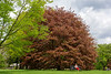 May 16 - National Love a Tree Day