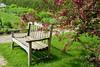 Bench beside a crab apple tree.<br /> Matthaei Botanical Gardens.<br /> Ann Arbor, Michigan.