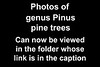 Link to folder for trees by genus