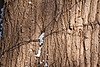 Bark, snow, and shadows.<br /> Oak, I think.<br /> <br /> January 15, 2012