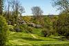 Lilac grove, Centennial Shrub Collection