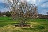 M05 Verbanica Saucer Magnolia