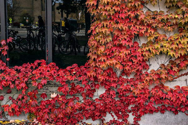 Fall Vines by Kind