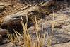 Dried grass on stony ground