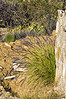 Ornamental grass along a retaining wall