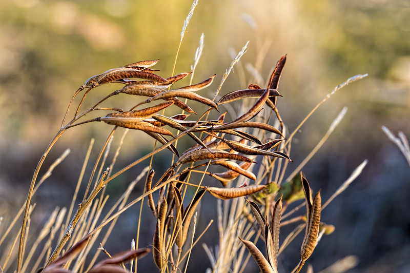 Seed heads and grasses