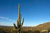 Centenarian(?) saguaro, Tucson rental house