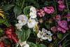 Beguiling begonias