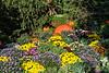Part of Meijer Gardens fall chrysanthemum display