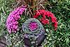D290-2018 - Fall floral display<br /> <br /> Frederik Meijer Gardens & Sculpture Park<br /> Grand Rapids, Michigan<br /> Taken October 17, 2018