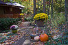 Chrysanthemums and ornamental pumpkins make a winning combination for seasonal decorations.  The squirrels loved eating the pumpkins, but left the mums alone.<br /> .<br /> Ann Arbor, Michigan<br /> October 12,  2012