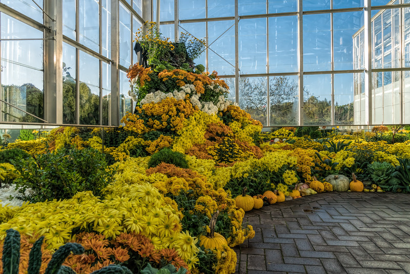 Part of the fall chrysanthemum extravaganza