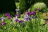 D154-2012 Iris (02)<br /> <br /> Toledo Botanical Garden, Ohio<br /> June 3, 2012<br /> (nex5n)