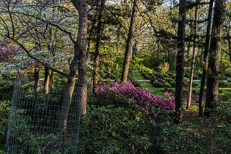 D133-2016  Scenes of spring, with dogwood and rhododendron in bloom<br /> <br /> Taken May 13, 2016<br /> Looking from Forest Hill Cemetery down into the Arboretum Peony Garden<br /> Ann Arbor, Michigan