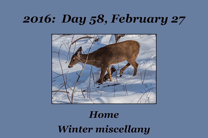 Photo Set for Day 58, February 27, 2016
