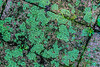 Featured:  Lichen loves moisture - natural abstract