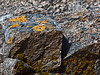 Lichen on beach rocks.<br /> <br /> Haystack Rock Beach<br /> Bandon, Oregon<br /> September 2010