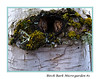 Birch Bark Micro-Garden #2<br /> <br /> Fungi (or things resembling fungi) and more growing around a limb scar on a birch tree trunk.  <br /> Fungi, or maybe fungiform lichen, maybe ferns, maybe algae, maybe moss.  If anyone can identify the various plants, I'd love to hear from you.<br /> <br /> Because the focus was soft, I applied several filters from Photoshop CS5 to try to give the individual plants more definition and the overall shot more interest.<br /> <br /> Eugene, Oregon<br /> December 2010