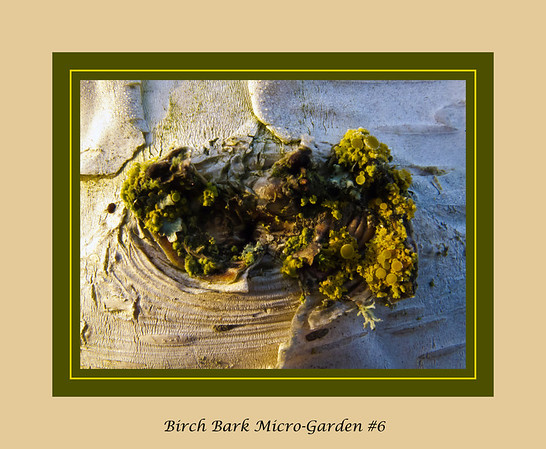 Vegetation in Miniature - mostly moss and lichen