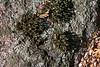 Rock Garden.<br /> Moss casting shadows on a boulder; lichen and leaves.<br /> <br /> Hosta Hillside, Hidden Lake Gardens<br /> Lenawee County, Michigan<br /> October 5, 2011