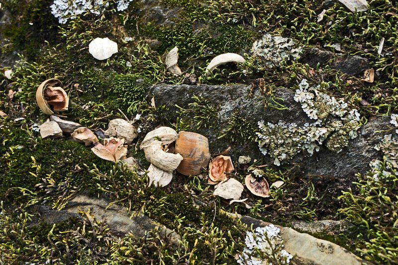 Nut shells, moss, and lichen