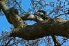Magnolia limb bearing gifts of spring blossoms