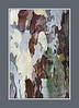 Abstract:  Wet sycamore bark.<br /> .<br /> Toledo Botanical Garden, Ohio<br /> August 10, 2012
