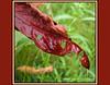 Wet sumac leaf.