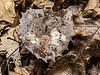 Artistic aspen leaf