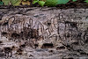 Worm tracks in wood