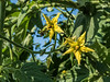 For 2017-07-25:  Test your horticultural knowledge
