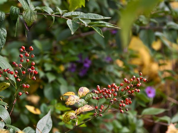 Non-floral vegetation Wild