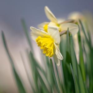 Spring feelings...