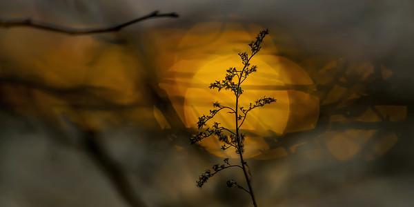 Spring sunset...