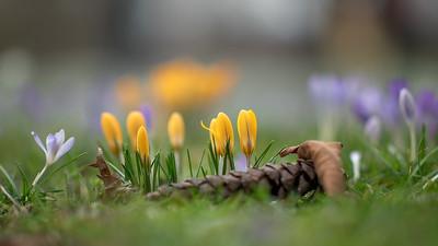 Spring - definitely!