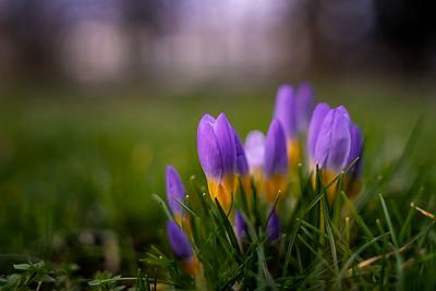 Spring - finally!