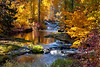 TroutLake-Creek-Autumn_7085