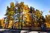 Autumn-TroutLake-sunstar_20181020_7147