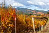 WSRiverValley-2019-Autumn-Orchards-4170