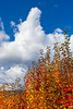 WSRiverValley-2019-Autumn-altocumulus-4171